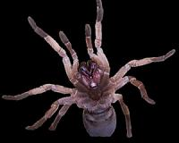 Spiders can sail the oceans like ships