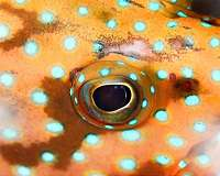 Novel software helps scientists see what animals see