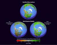 Siberian researchers contribute to global monitoring of the Earth's Green Lungs
