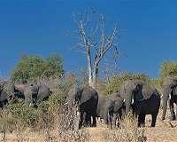 Botswana animal groups outraged at elephant killing