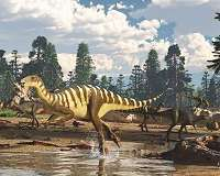 Unusual carnivorous dinosaurs called noasaurids lived in Australia