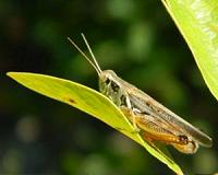Grasshoppers signal slow recovery of post-agricultural woodlands