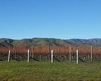 Wine regions face dramatic shrink with climate change: study