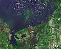 Lakes worldwide are experiencing more severe algal blooms