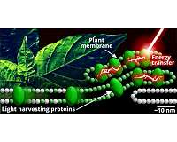 Starting small to answer the big questions about photosynthesis