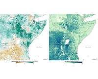 Could Satellites Help Head Off a Locust Invasion?