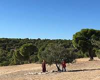 Seeds of hope: Young volunteers replant Tunisia forests