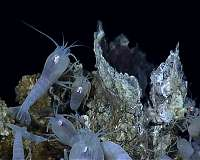 Deep sea vents had ideal conditions for origin of life