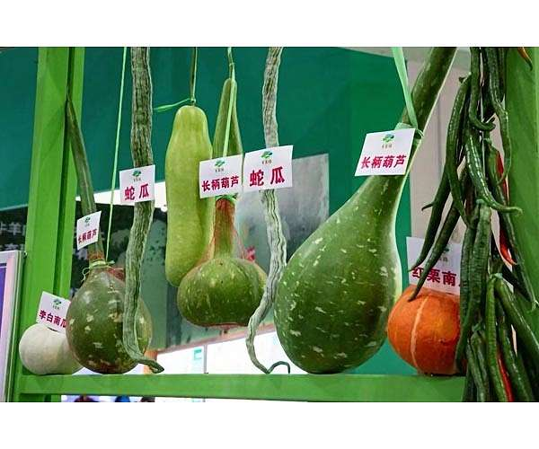 china-vegetable-grown-from-seeds-cultivated-in-space-hg.jpg