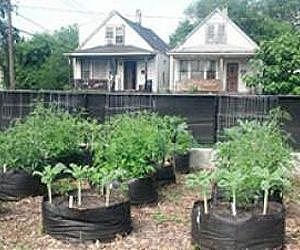 Urban gardeners may be unaware of how best to manage contaminants in soil